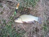 Мой первый линь или особенности ловли линя в мае.