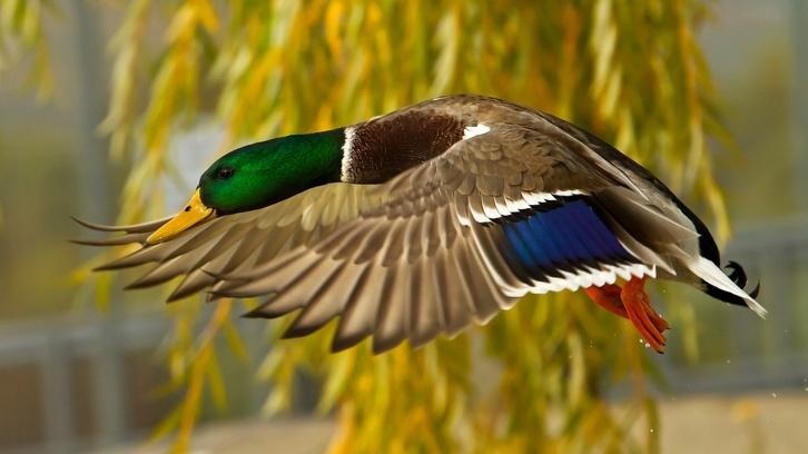 Открытие осенней охоты в Республике Татарстан 2014 год