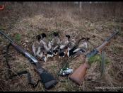 Охота на утку осенью в Татарстане