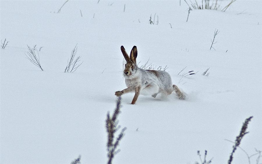 Открытие охоты на зайца, лису, волка и бобра в Татарстане - 2014