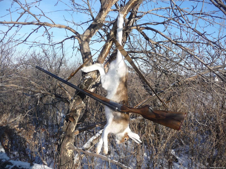 Нормы добычи пушных животных в Республике Татарстан