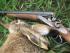 Охота на зайца по чернотропу. Тактика и особенности