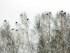 Зимняя охота на тетерева на лунках