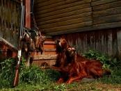 Открытие летне-осенней охоты в Татарстане - 2015 год