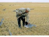 Стрельба гусей: практика и реальность