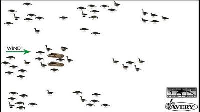 схема расстановки чучел гусей