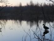 Места для весенней охоты с подсадной уткой