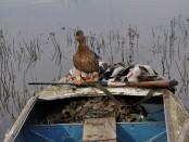 Организация охоты с подсадной в Казани