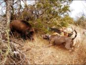 подранок на охоте